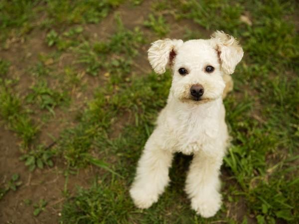 【愛犬同伴OK】ワンちゃんと過ごす寛ぎの旅♪
