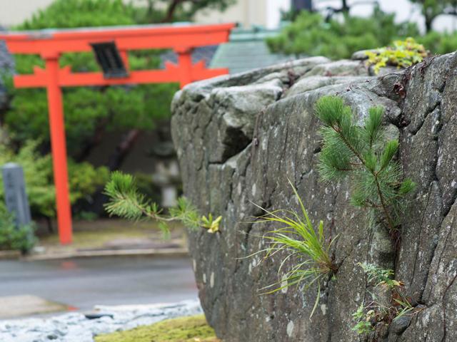 玄関(お出迎えの松)