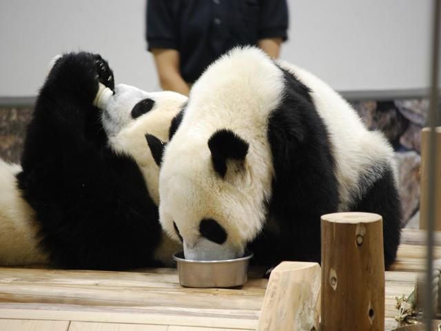 双子のパンダのお食事タイム♪(2009年8月撮影)